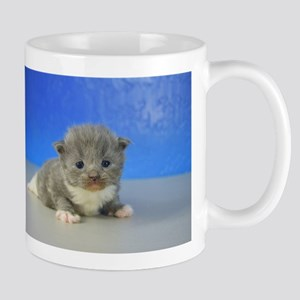 Hunter - 126 Blue Mitted Solid Ragamuffin Kitten M