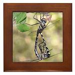 Dragonflies Framed Tile