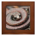 California Slender Salamander Framed Tile
