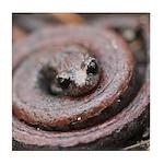 California Slender Salamander Tile Coaster