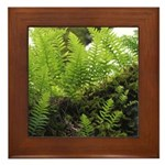 Ferns on Oak Tree Framed Tile