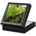 Ferns on Oak Tree Keepsake Box