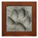 Gray Fox Track Framed Tile