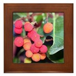Madrone Berries Framed Tile