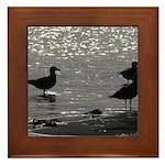 Gulls Wading Framed Tile