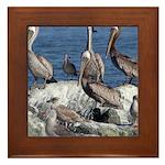 Pelicans on Rock Framed Tile