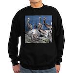 Pelicans on Rock Sweatshirt