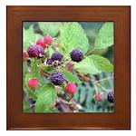 Wild Raspberries Framed Tile