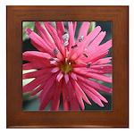 Indian Pink Framed Tile
