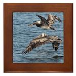 Pelicans in Flight Framed Tile