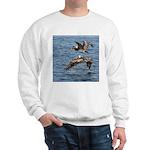 Pelicans in Flight Sweatshirt