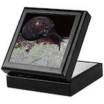 Pacific Sideband Snail Keepsake Box