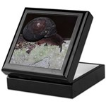 Pacific Sideband Snail Keepsake Box