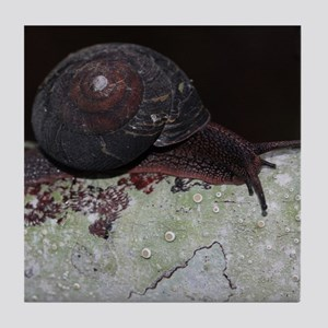 Pacific Sideband Snail Tile Coaster