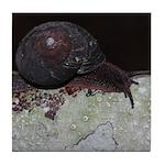 Pacific Sideband Snail Tile Coaster