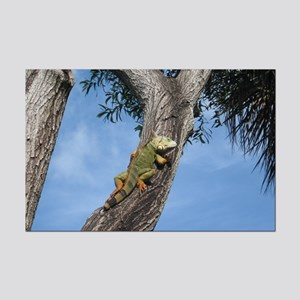 Iguana in the Cypress Tree Poster Print