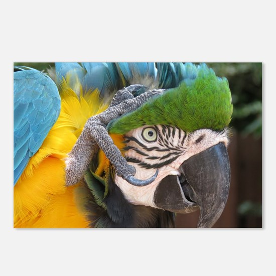 Cute Macaws Postcards (Package of 8)