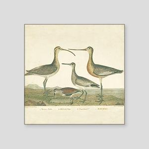 Antique Birds Coastal Marsh Sticker