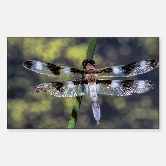 Unique Dragonfly Sticker (Rectangle)