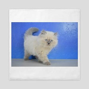 Cleopatra - Ragamuffin Kitten Blue Point Queen Duv