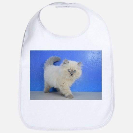 Cleopatra - Ragamuffin Kitten Blue Point Baby Bib