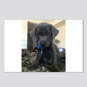 Charcoal labrador case Postcards (Package of 8)