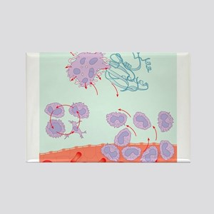 Human immune response, artwork - Magnets