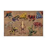 Poison Frogs Mini Poster Print