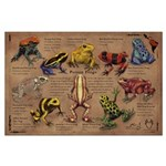 Poison Frogs Large Poster