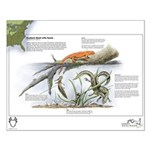 Newt Life Stages Small Poster