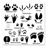 """Animal Tracks Collection Square Car Magnet 3"""""""