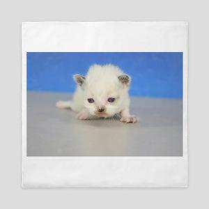 Jewel - Munchkin NS Kitten Seal Tortie Pointed Lyn