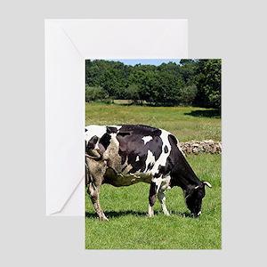 Black & white dairy cow , El Ca Greeting Cards
