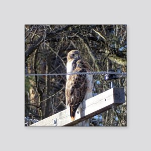 Red-tailed Hawks Sticker