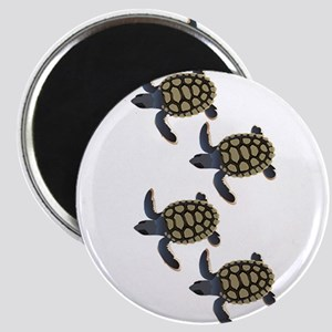 HATCHLINGS Magnets