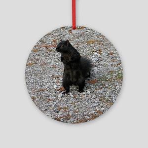 Black Squirrel With Attitude Round Ornament