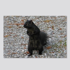 Black Squirrel With Attit Postcards (Package of 8)