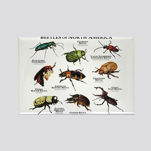Beetles of North America Rectangle Magnet