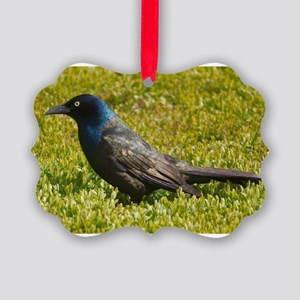 Grackle Picture Ornament