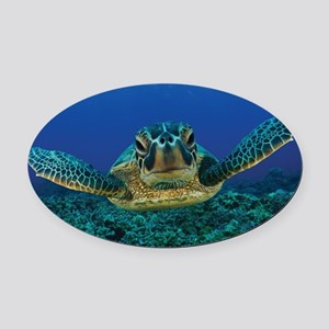 Turtle Swimming Oval Car Magnet