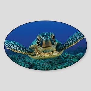 Turtle Swimming Sticker