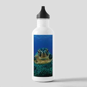 Turtle Swimming Sports Water Bottle