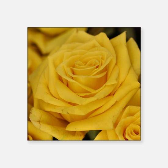 Yellow roses Sticker