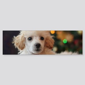 Christmas toy poodle puppy Bumper Sticker