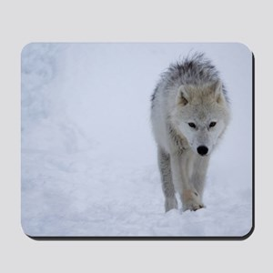 Arctic wolf walking in the snow Mousepad