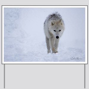 Arctic wolf walking in the snow Yard Sign