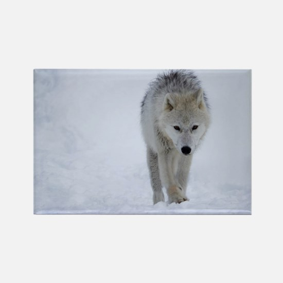 Arctic wolf walking in the snow Magnets