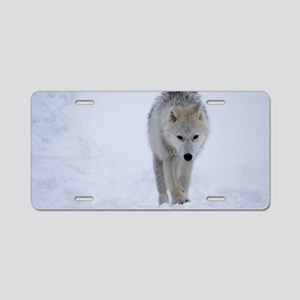 Arctic wolf walking in the Aluminum License Plate
