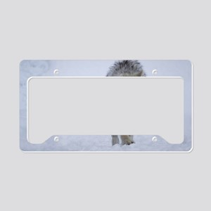 Arctic wolf walking in the sn License Plate Holder