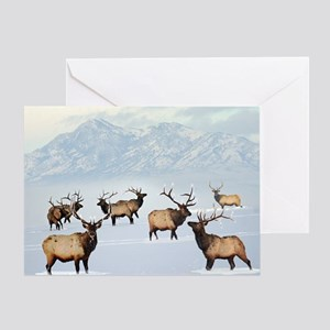 Northern bull elk Greeting Cards